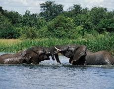 elephants wildlife safarisin uganda