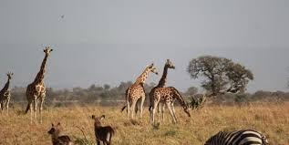 karamoja , safaris in uganda
