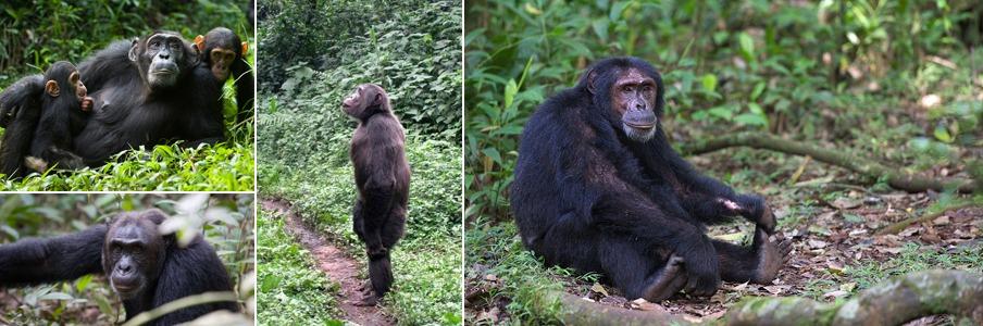 5 days Uganda safaris