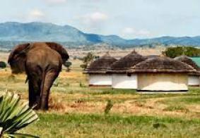 kidepo national park uganda