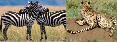 kidepo-national-park-uganda
