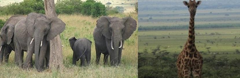 masai-mara-gamedrives