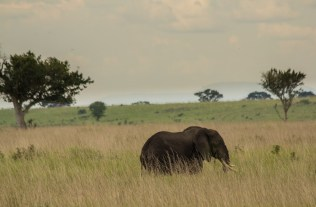 murchison falls National park , Uganda safaris