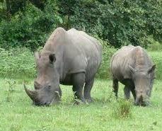 Ziwa rhinos