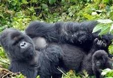 trek gorilla -uganda