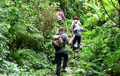 nature walks in bwindi forest national park