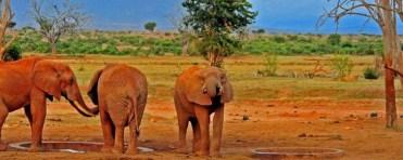 tsavo-national-park-kenya tours
