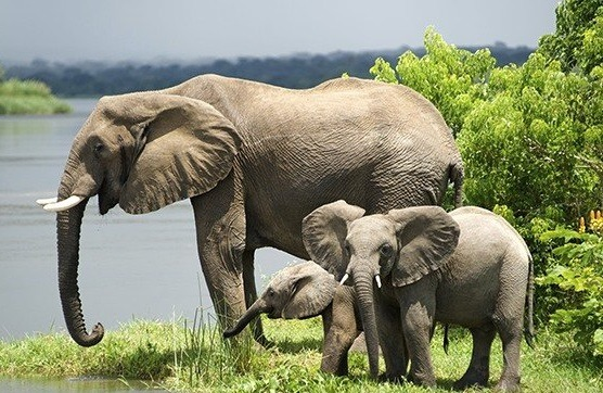 Queen Elizabeth National Park Uganda