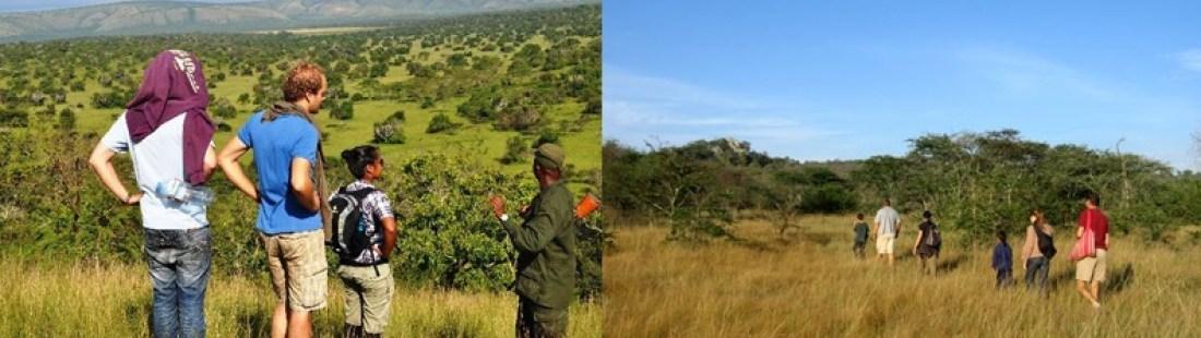 walking-safari-mburo