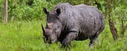 ziwa rhino sanctary