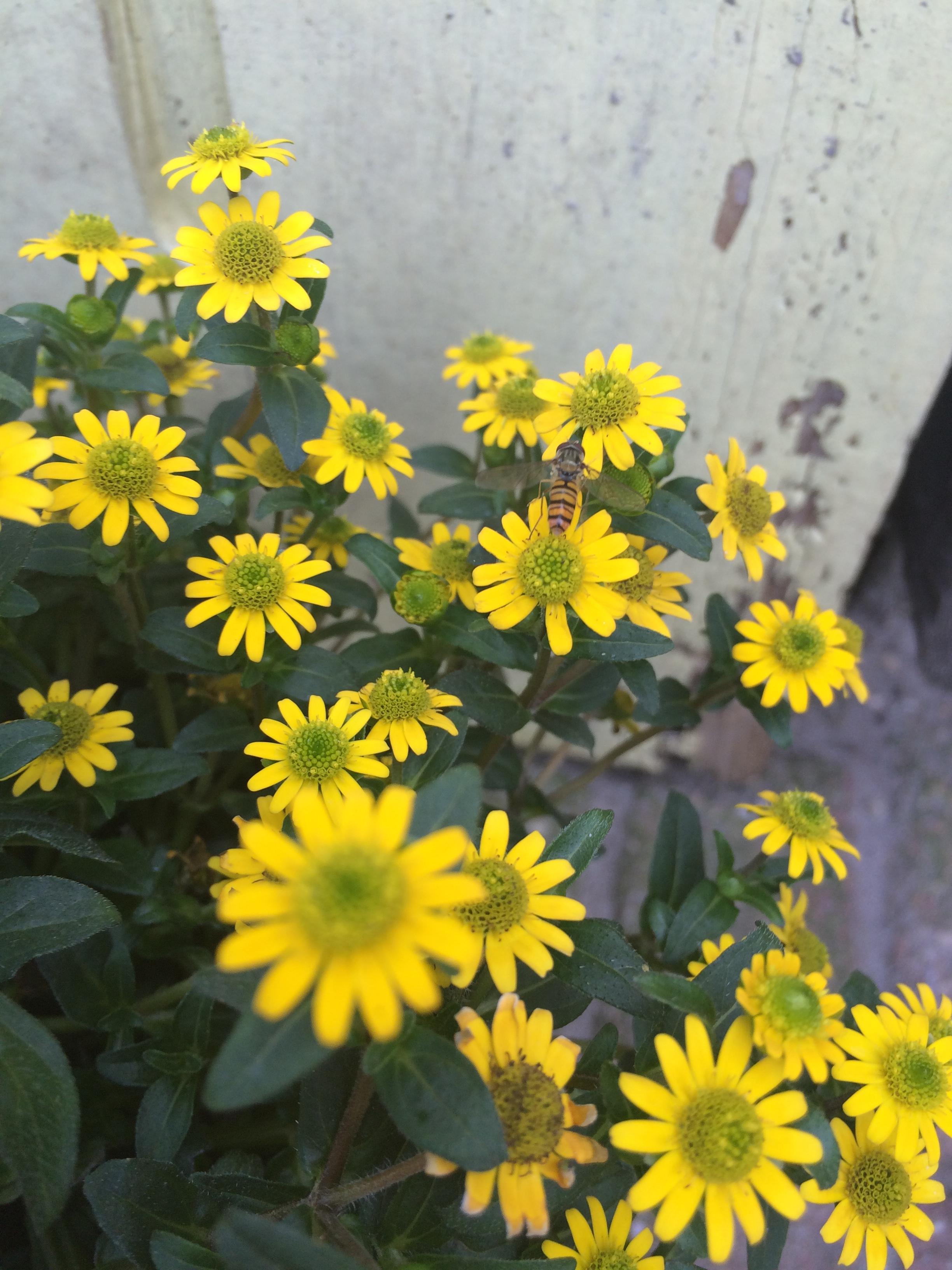 Flower honey – tell me more !