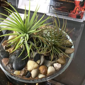 Air Plant display with river rocks