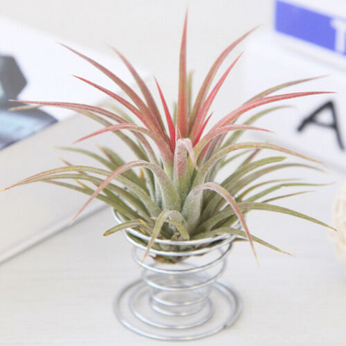 air plant wire stand display
