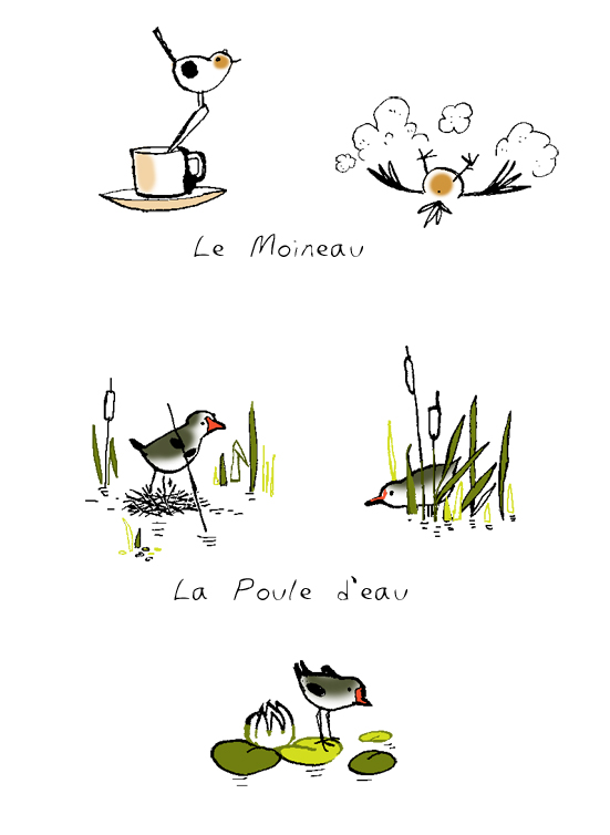 Illustrations guide oiseaux Terre Sauvage