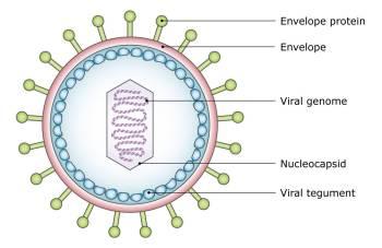 sleeping virus