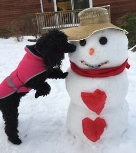 Auggie Valentine's Day