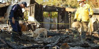 Photograph of two men and a dog standing in a burned structure