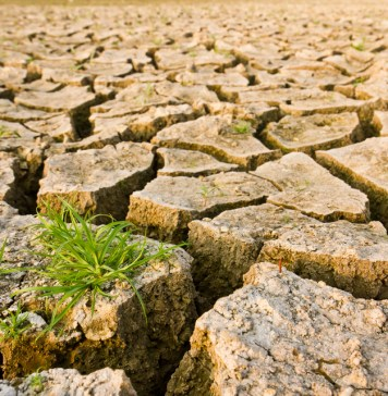 photograph of dry, cracked earth with grass growing on a few individual pieces