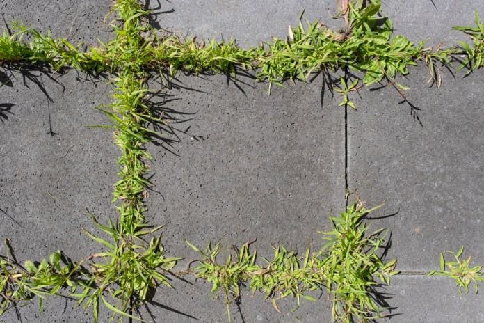photograph of plants growing between sidewalk cracks