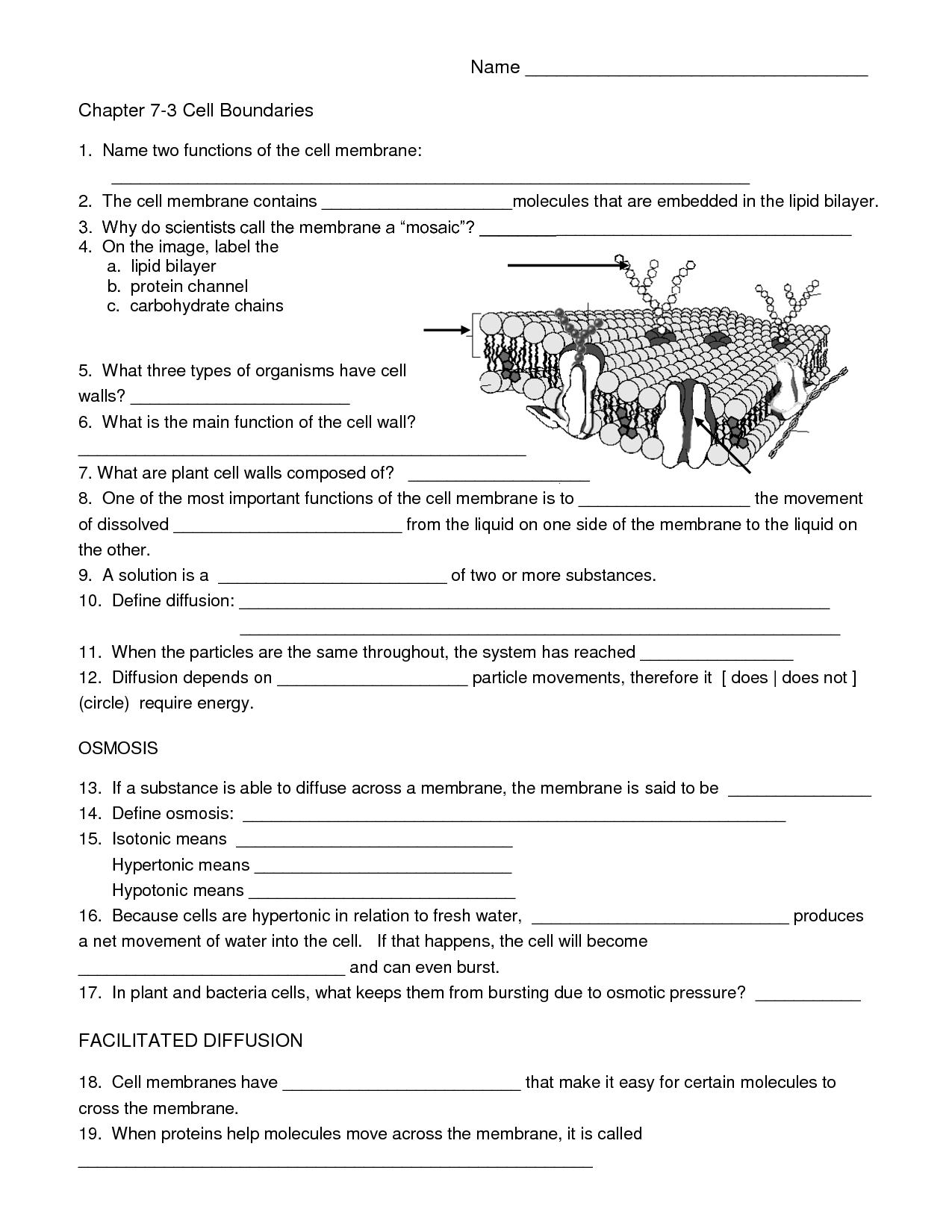 7 Best Images Of Free Printable Biology Worksheets High School