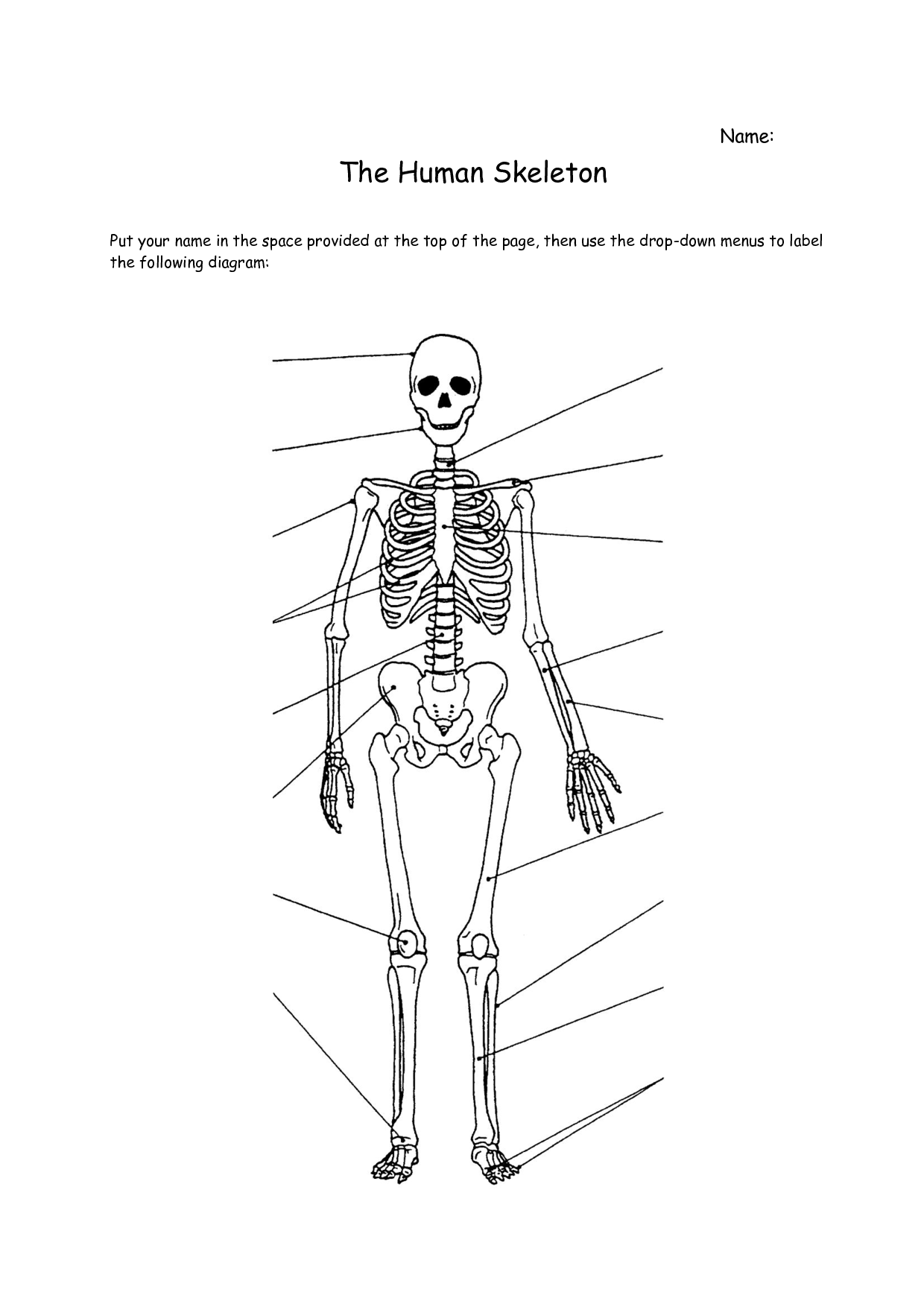 4 Best Images Of Printable Bone Worksheets
