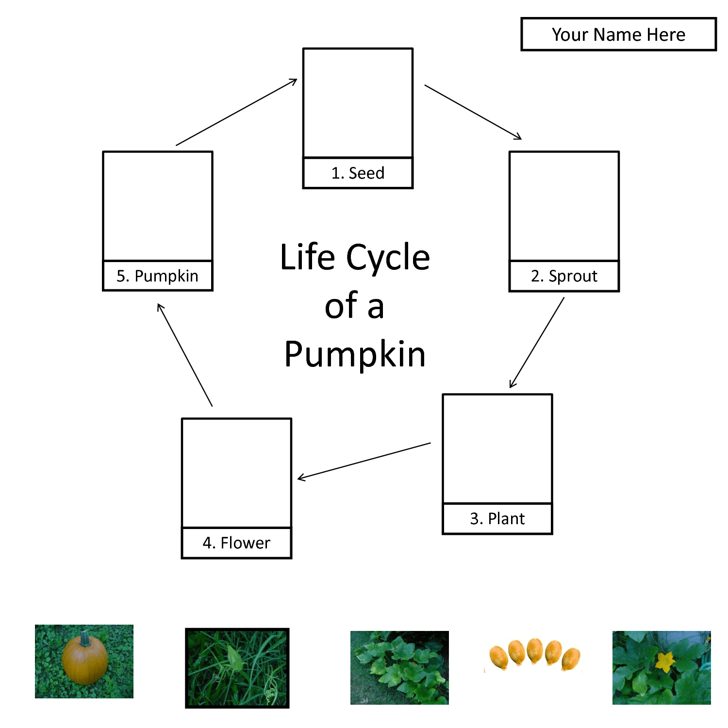 3 Best Images Of Kindergarten Pumpkin Life Cycle Printable