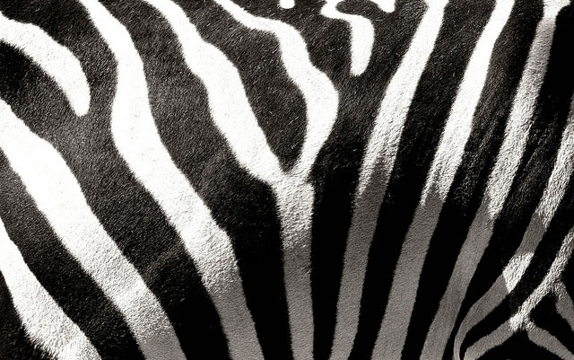 Stripes by Daniel Petzold Photography on Flickr: http://bit.ly/18z054R