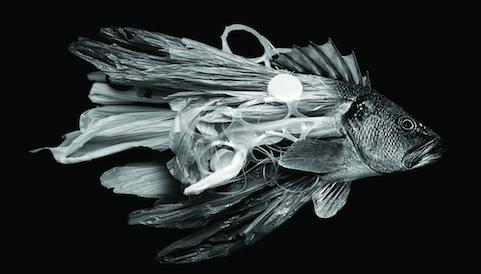 Thumbnail for Plastic Fish: Horror & Beauty in Poster Design