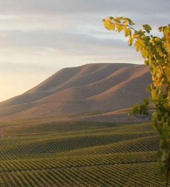 The Cambria Vines