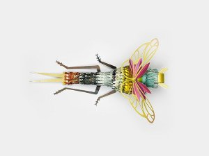 Insect 6