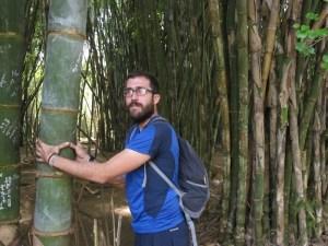 Bambú y sus variedades