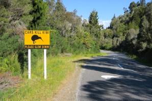 señal kiwi