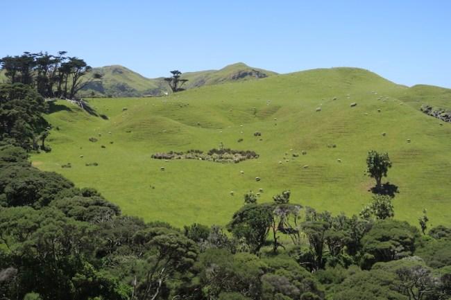 colinas verdes de nueva zelanda