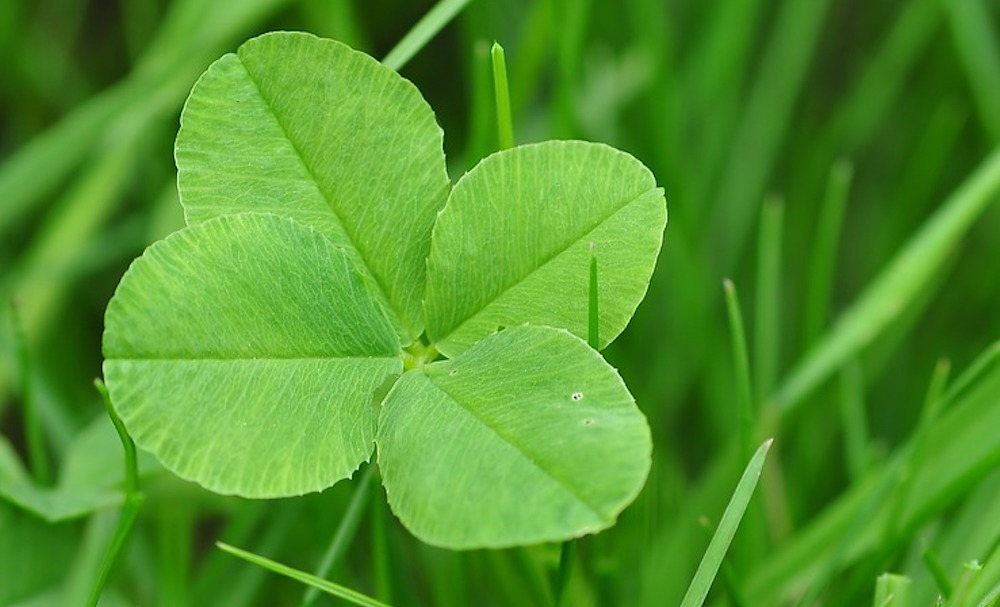 luck-pritha-dubey