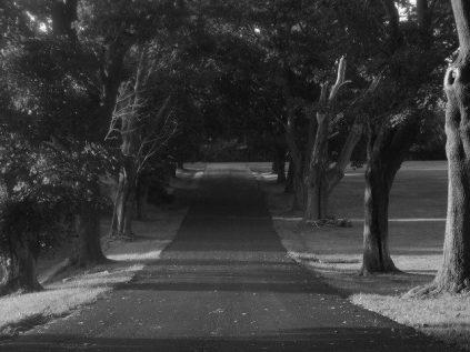 Rural_driveway