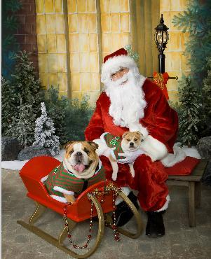 Pets With Santa Portraits For The Holidays Montville
