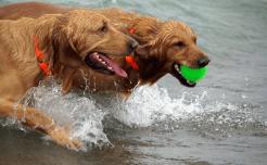 Playful dog is healthy dog