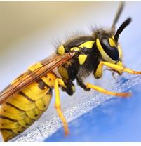 Enquiry-For-Pest-Control-In-Chadderton