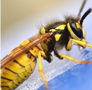 Pest Prevention Service in Wilmslow