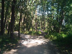 озёра в круглике лес