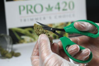 marijuana scissors