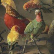 Jacques Barraband : Le peintre des oiseaux au temps de Napoléon Ier