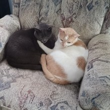 Cuddly rescues