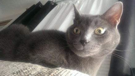 sky cat