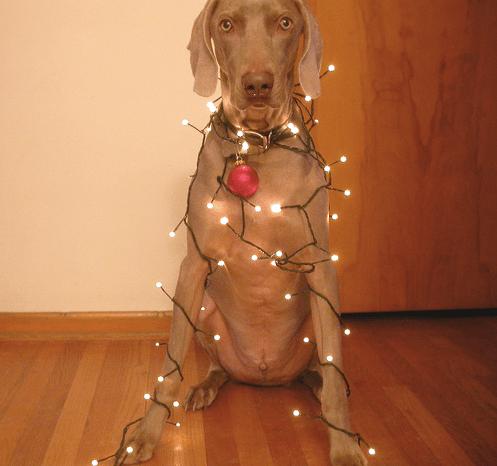 Christmas-Lights.Jpgchristmas-Lights-14-1