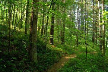 Directia Silvica Braila gestioneaza o suprafata de fond forestier de peste 25 mii hectare