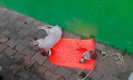 El 26 de enero abandonaron el mismo mensaje en la colonia 20 de noviembre en Acapulco. Foto: Especial