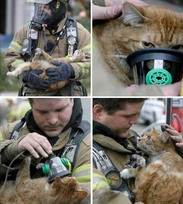 hasici-zachrana-zvirat-11