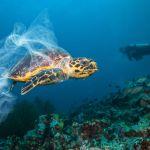 ekologie útes