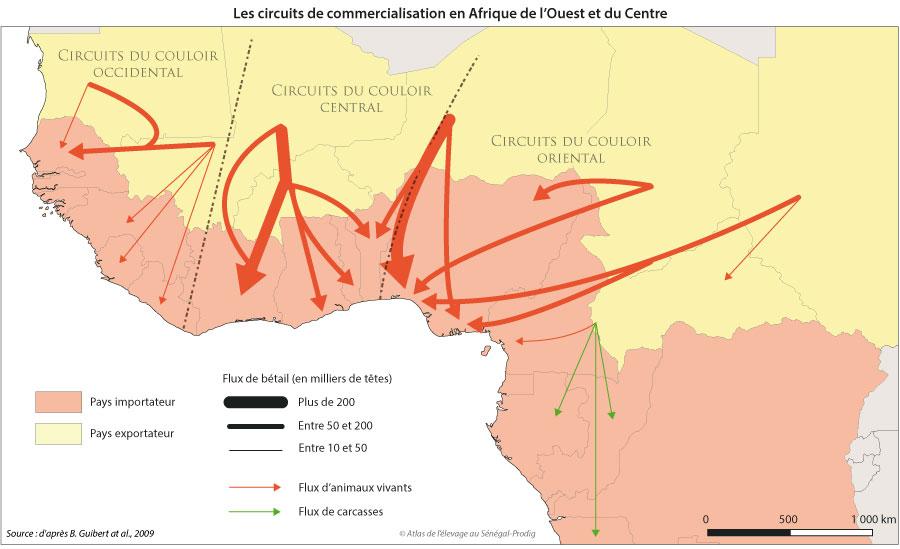Sénégal-Le commerce de bétail sur pied-Les circuits régionaux de commercialisation-Les circuits de commercialisation en Afrique de l'Ouest et du Centre